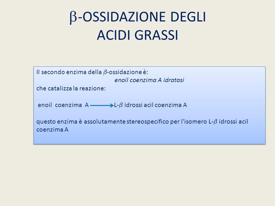 b-OSSIDAZIONE DEGLI ACIDI GRASSI