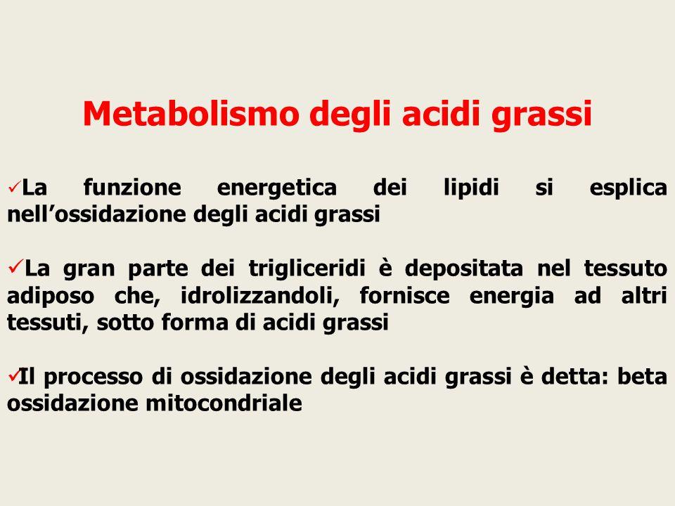 Metabolismo degli acidi grassi