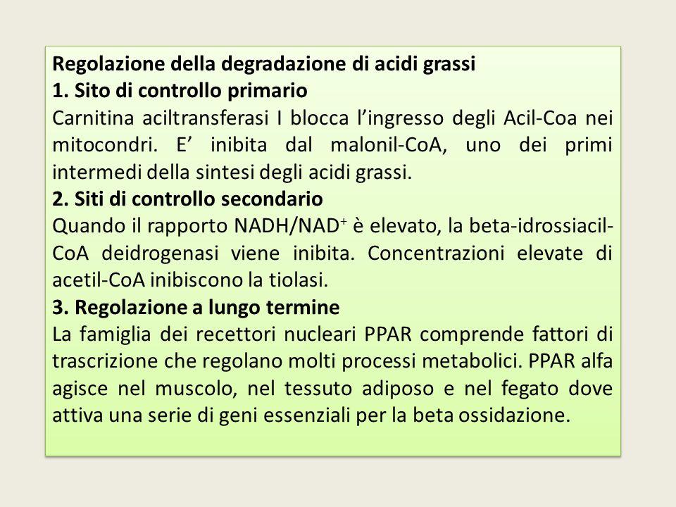 Regolazione della degradazione di acidi grassi