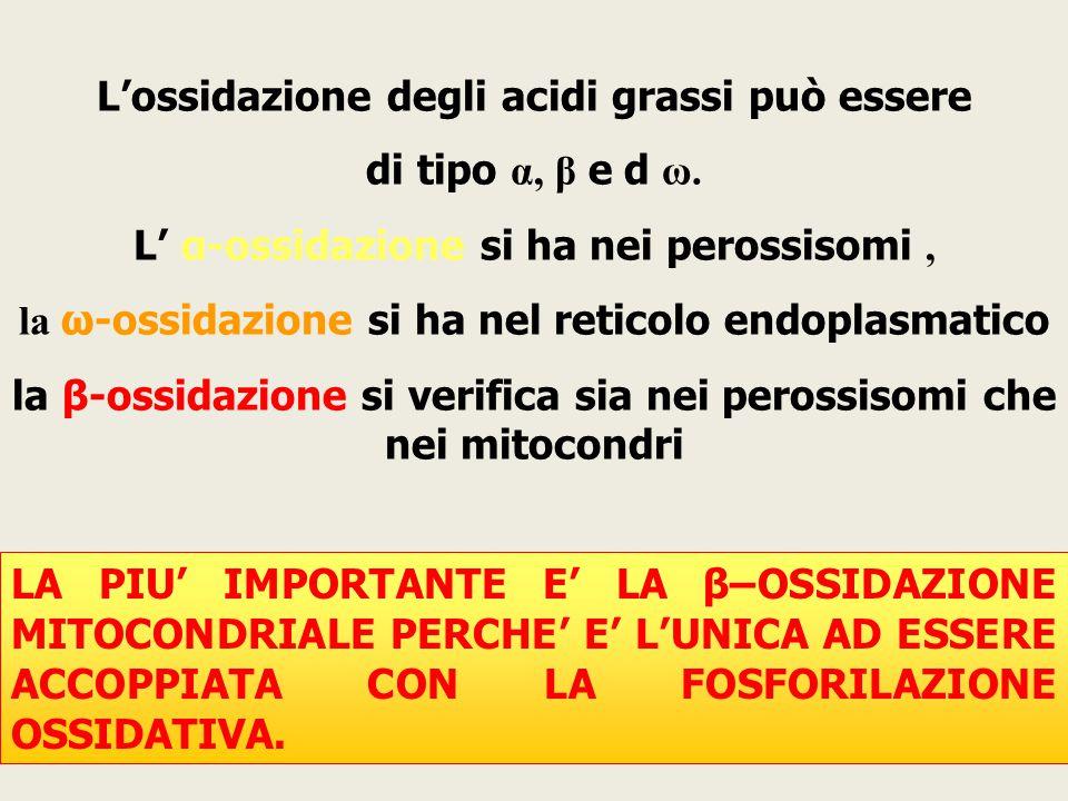 L'ossidazione degli acidi grassi può essere di tipo α, β e d ω.