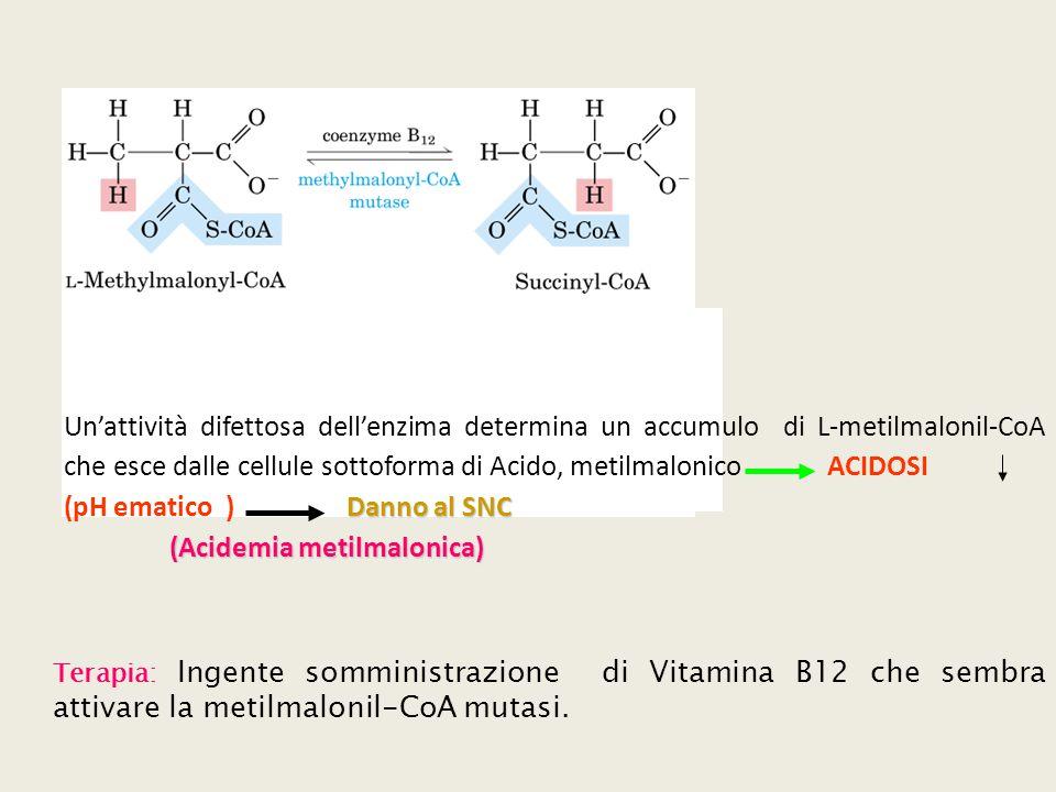 (pH ematico ) Danno al SNC (Acidemia metilmalonica)
