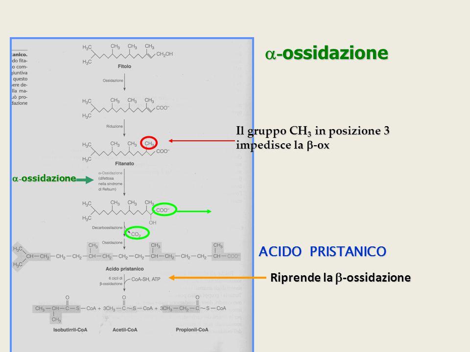 a-ossidazione ACIDO PRISTANICO Riprende la b-ossidazione