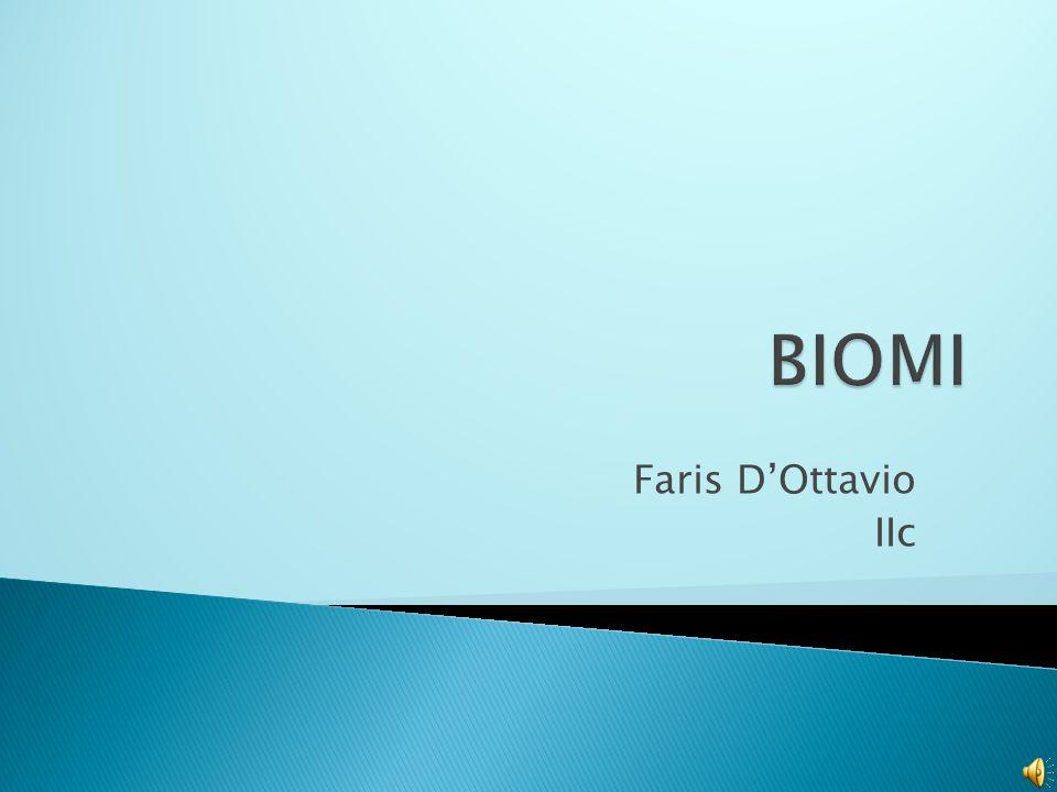 BIOMI Faris D'Ottavio IIc
