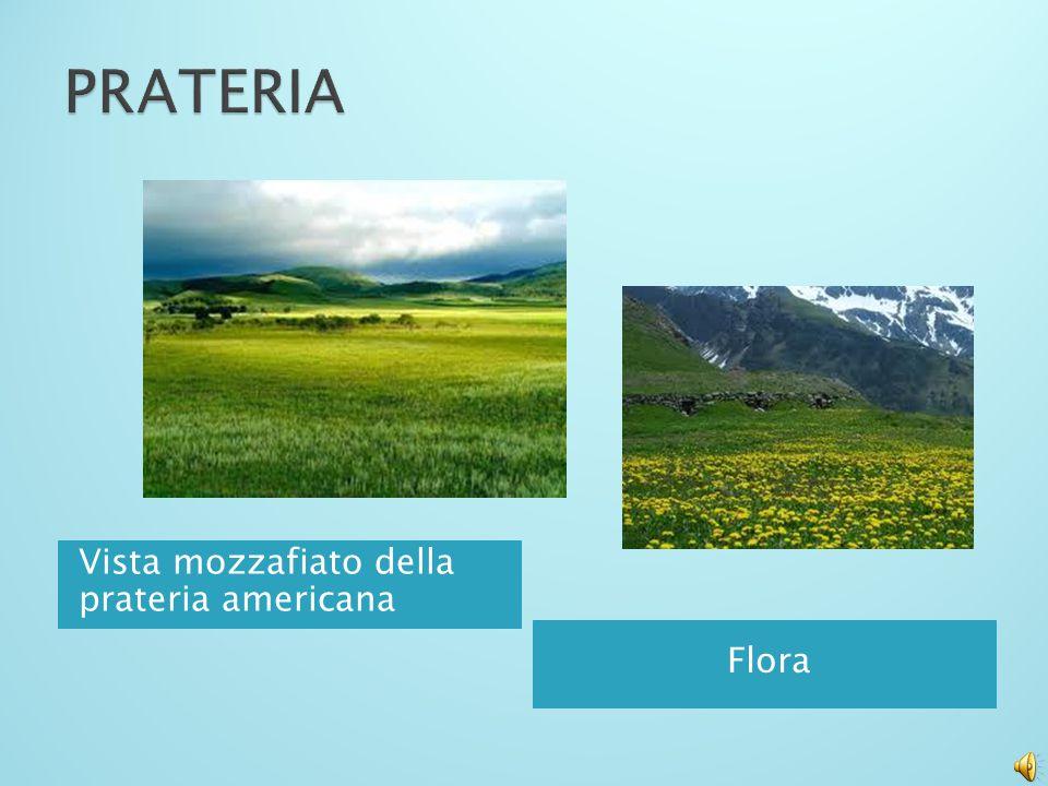 PRATERIA Vista mozzafiato della prateria americana Flora