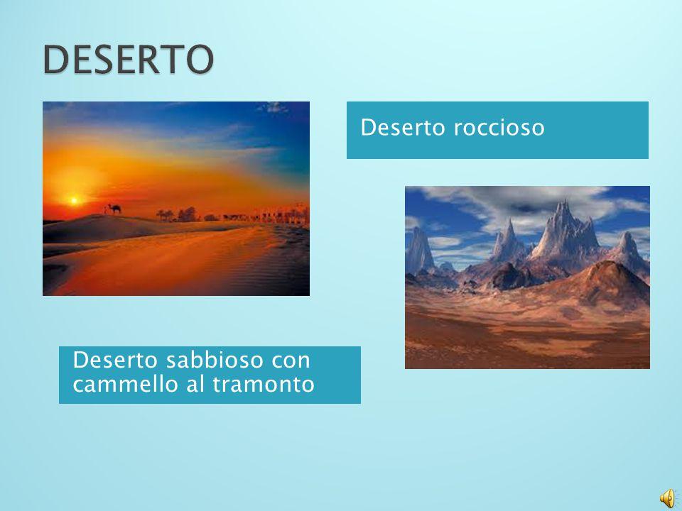 DESERTO Deserto roccioso Deserto sabbioso con cammello al tramonto