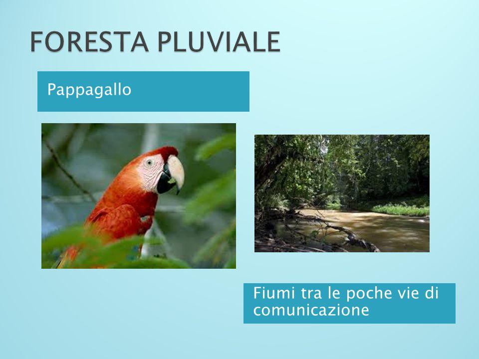 FORESTA PLUVIALE Pappagallo Fiumi tra le poche vie di comunicazione