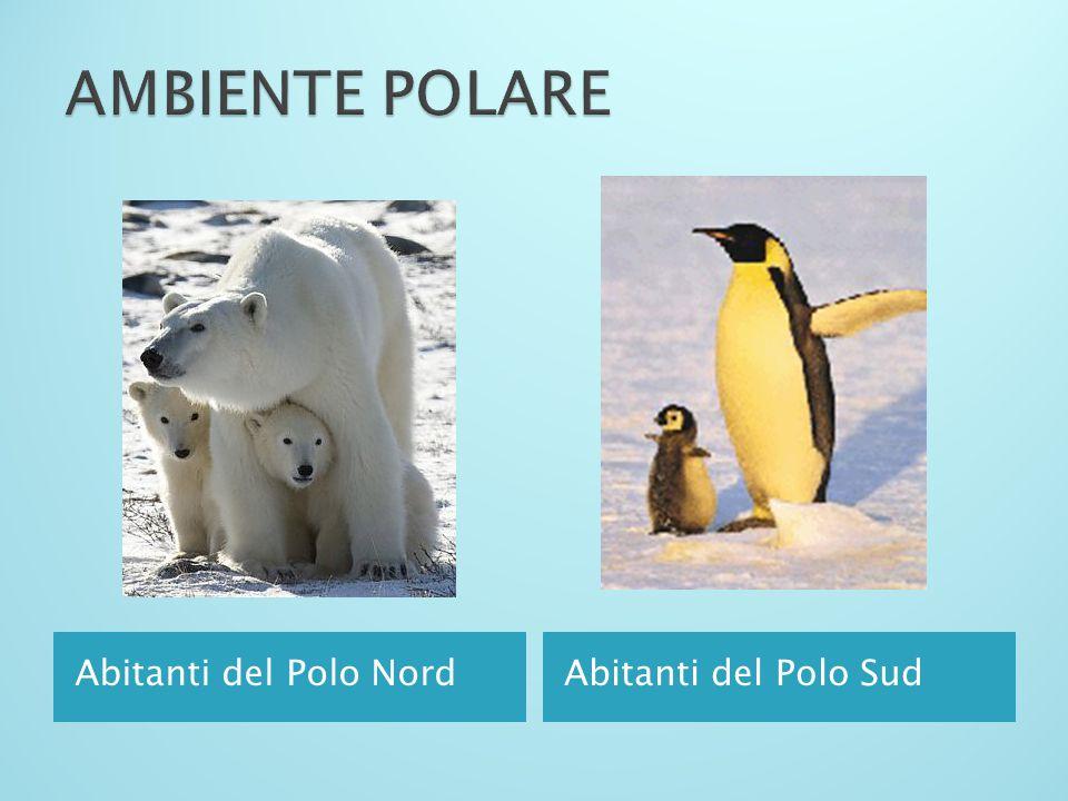 AMBIENTE POLARE Abitanti del Polo Nord Abitanti del Polo Sud