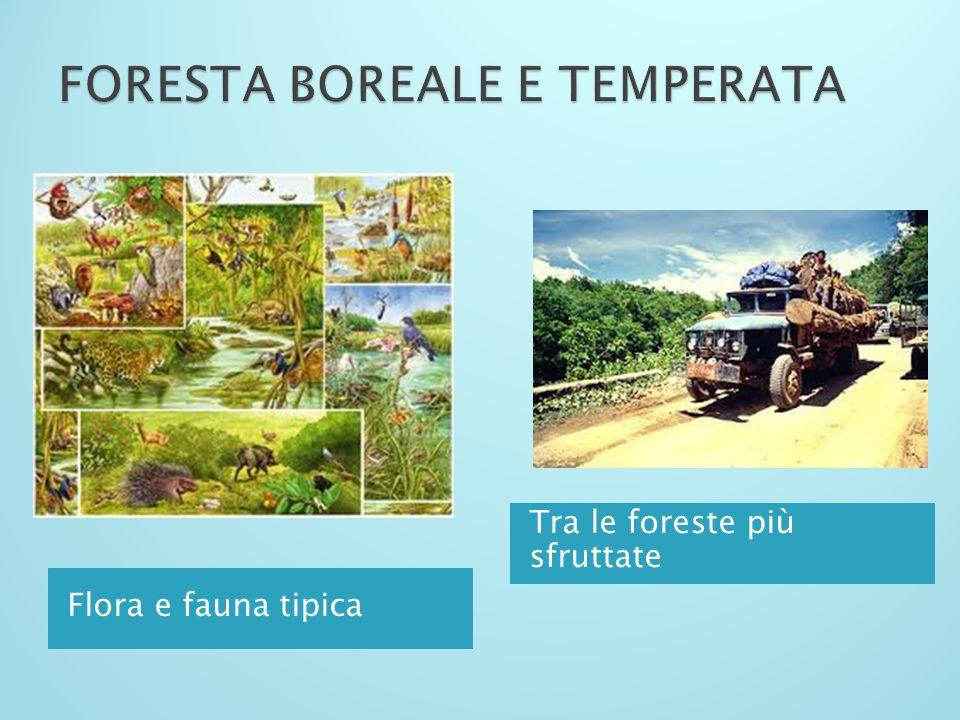 FORESTA BOREALE E TEMPERATA