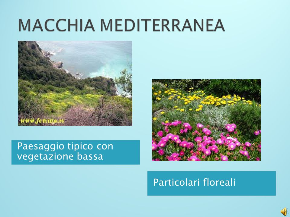 MACCHIA MEDITERRANEA Paesaggio tipico con vegetazione bassa