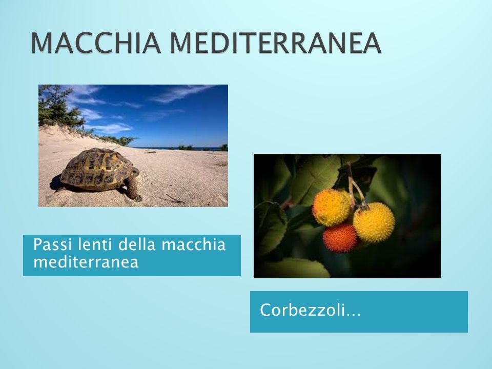 MACCHIA MEDITERRANEA Passi lenti della macchia mediterranea