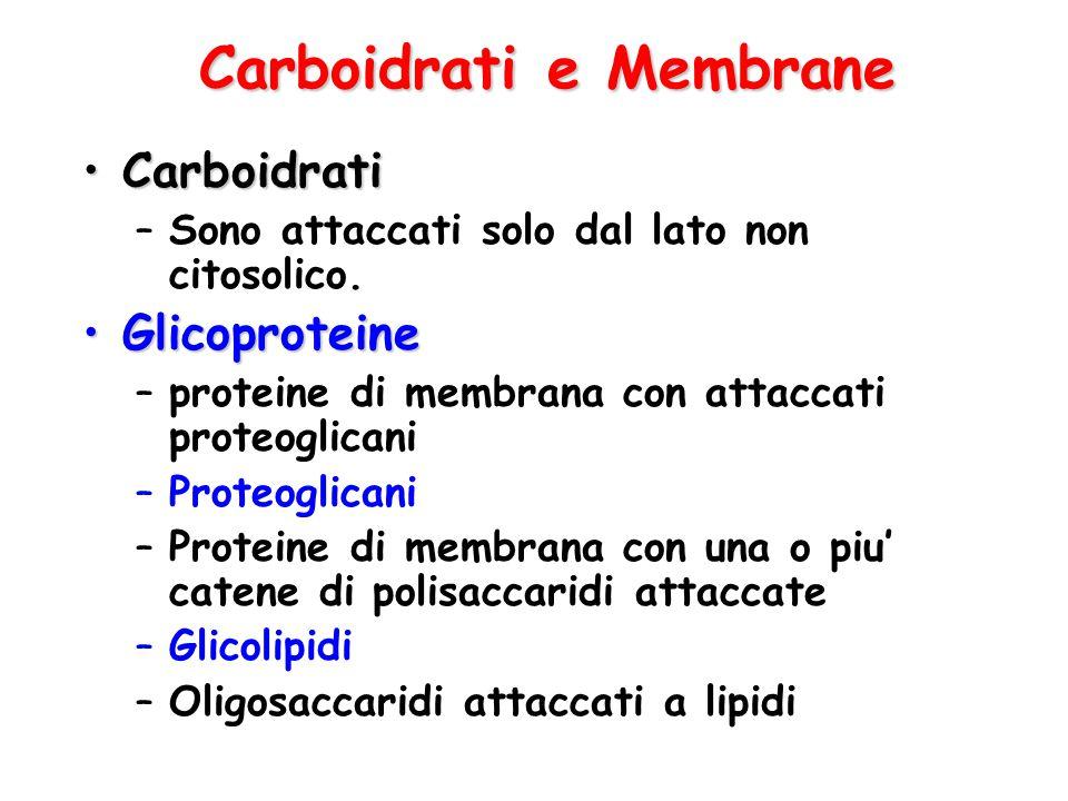 Carboidrati e Membrane