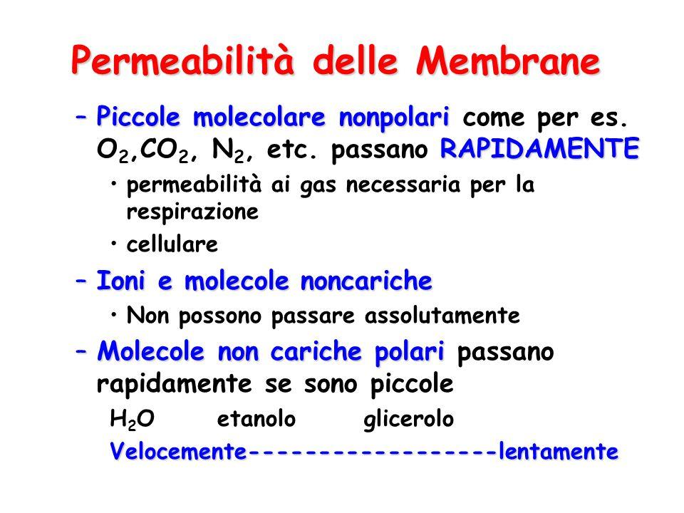 Permeabilità delle Membrane