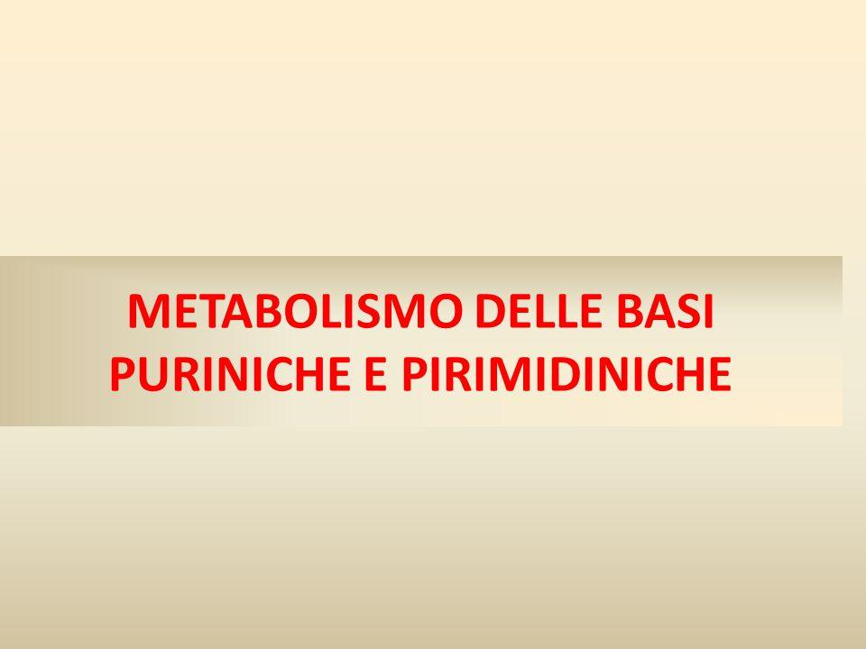 METABOLISMO DELLE BASI PURINICHE E PIRIMIDINICHE