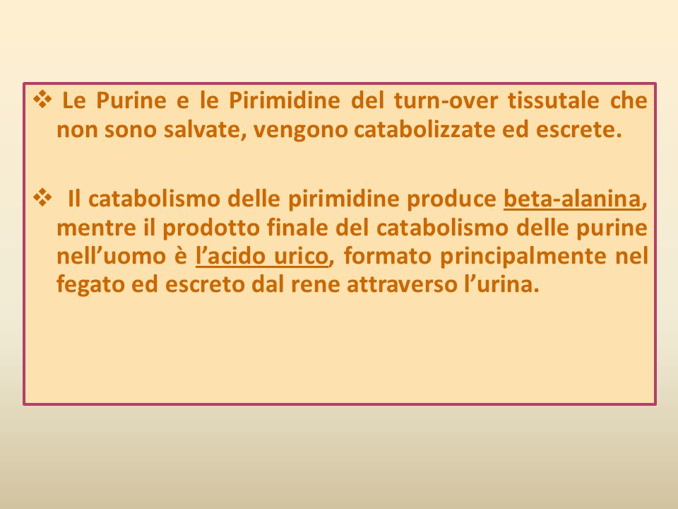 Le Purine e le Pirimidine del turn-over tissutale che non sono salvate, vengono catabolizzate ed escrete.