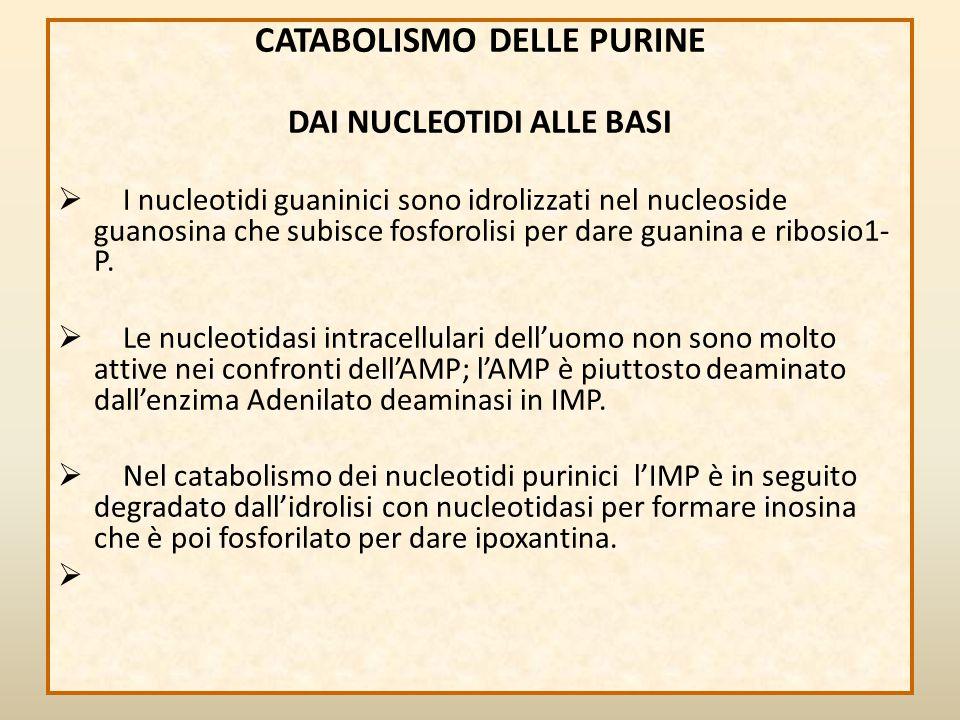 CATABOLISMO DELLE PURINE DAI NUCLEOTIDI ALLE BASI