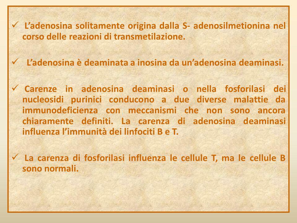 L'adenosina solitamente origina dalla S- adenosilmetionina nel corso delle reazioni di transmetilazione.
