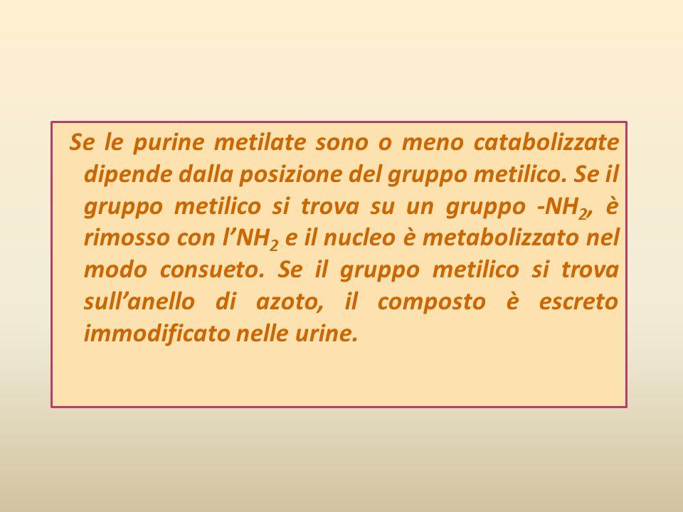 Se le purine metilate sono o meno catabolizzate dipende dalla posizione del gruppo metilico.