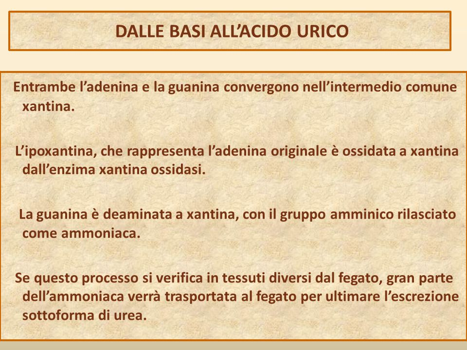 DALLE BASI ALL'ACIDO URICO