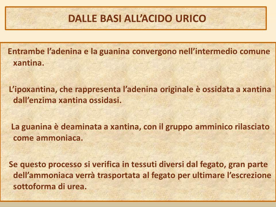 DALLE BASI ALL'ACIDO URICO