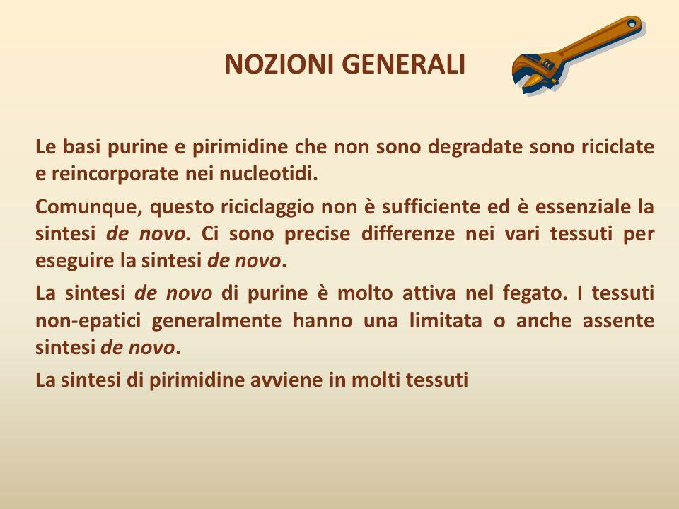 NOZIONI GENERALI Le basi purine e pirimidine che non sono degradate sono riciclate e reincorporate nei nucleotidi.