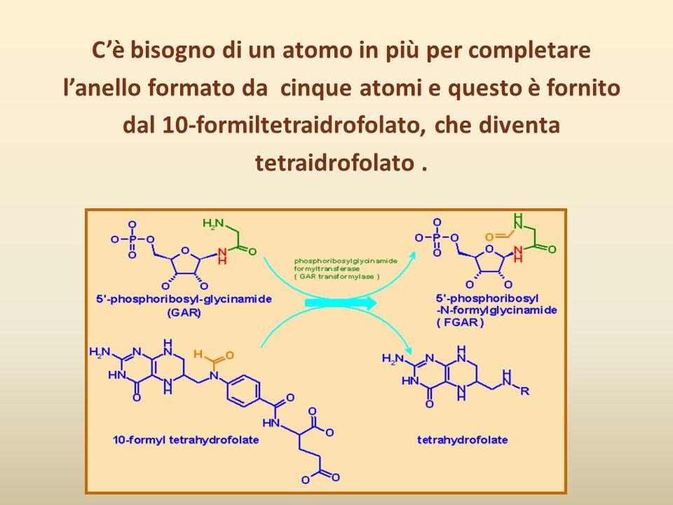 C'è bisogno di un atomo in più per completare l'anello formato da cinque atomi e questo è fornito dal 10-formiltetraidrofolato, che diventa tetraidrofolato .