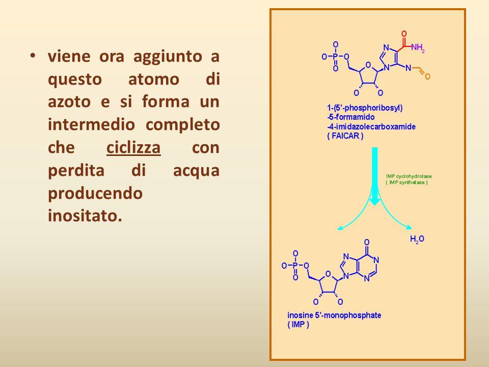 viene ora aggiunto a questo atomo di azoto e si forma un intermedio completo che ciclizza con perdita di acqua producendo inositato.