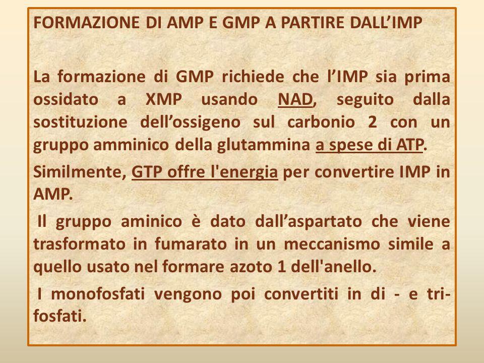 FORMAZIONE DI AMP E GMP A PARTIRE DALL'IMP