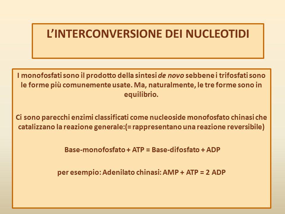 L'INTERCONVERSIONE DEI NUCLEOTIDI