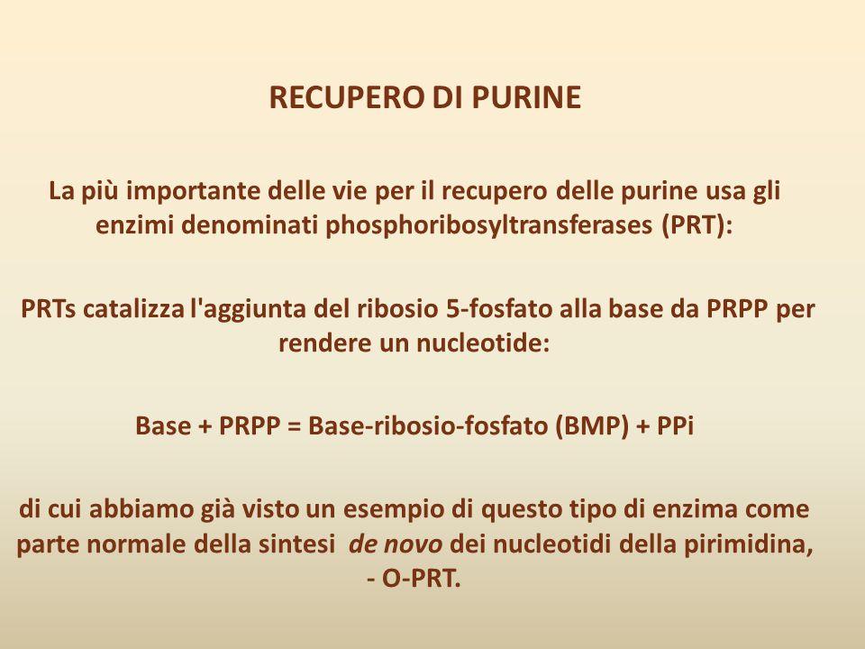 Base + PRPP = Base-ribosio-fosfato (BMP) + PPi