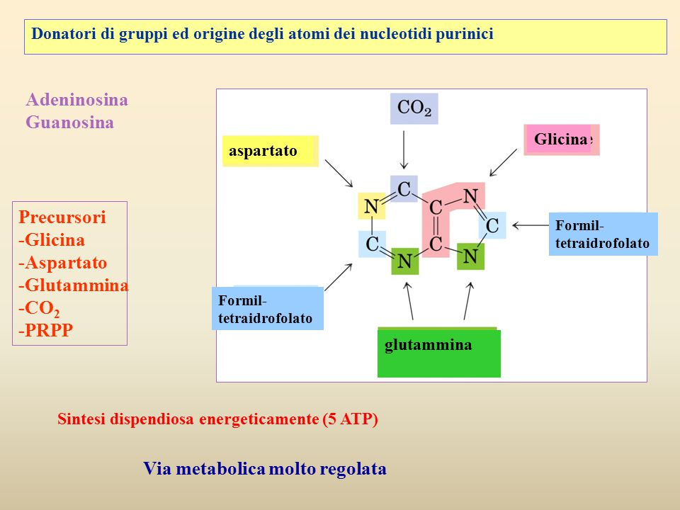 Via metabolica molto regolata