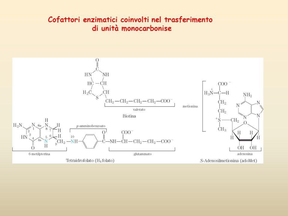 Cofattori enzimatici coinvolti nel trasferimento