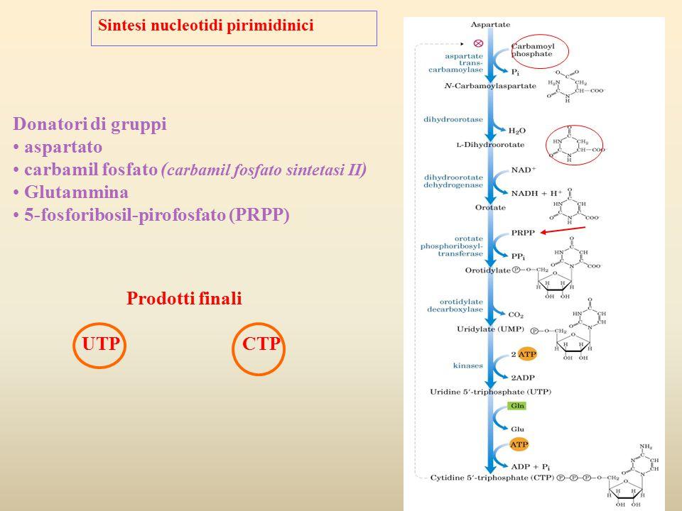 carbamil fosfato (carbamil fosfato sintetasi II) Glutammina