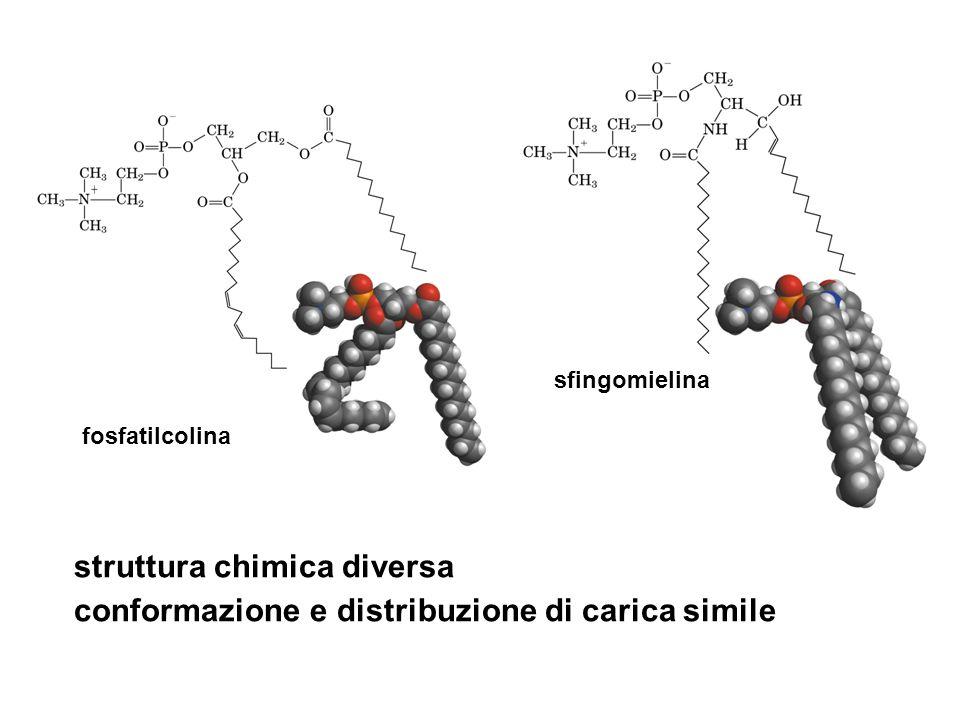 struttura chimica diversa