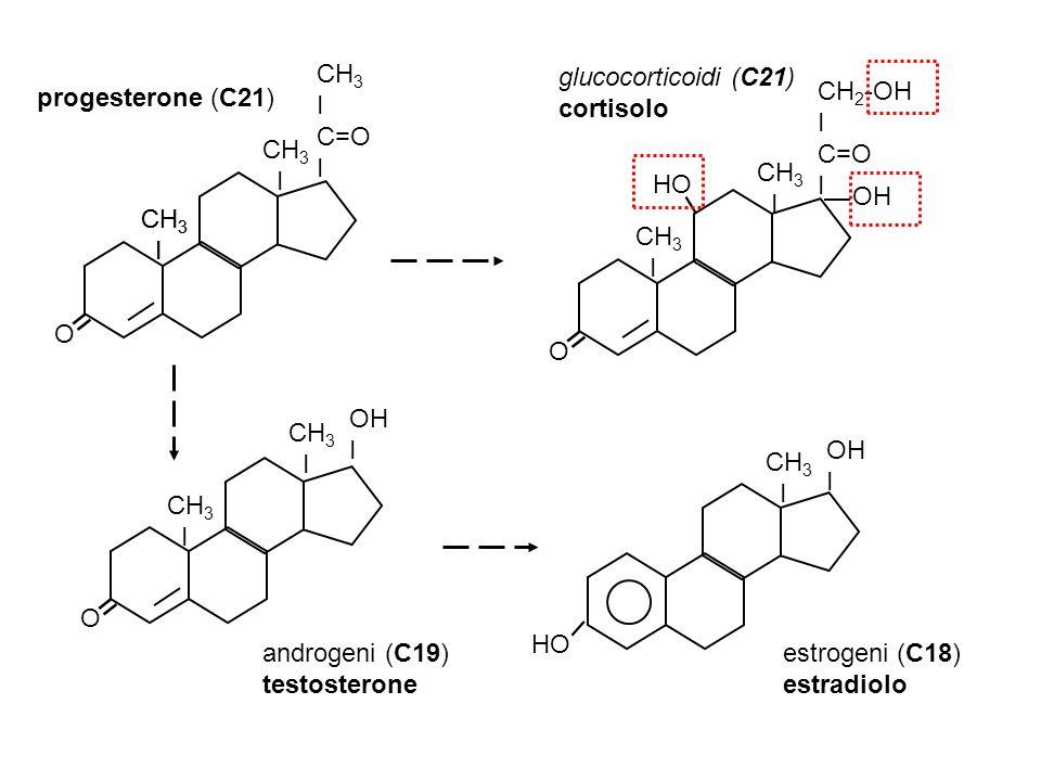 = O CH3 I C=O OH HO progesterone (C21) glucocorticoidi (C21) cortisolo