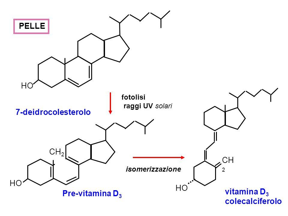 HO 7-deidrocolesterolo CH2 vitamina D3 Pre-vitamina D3 colecalciferolo