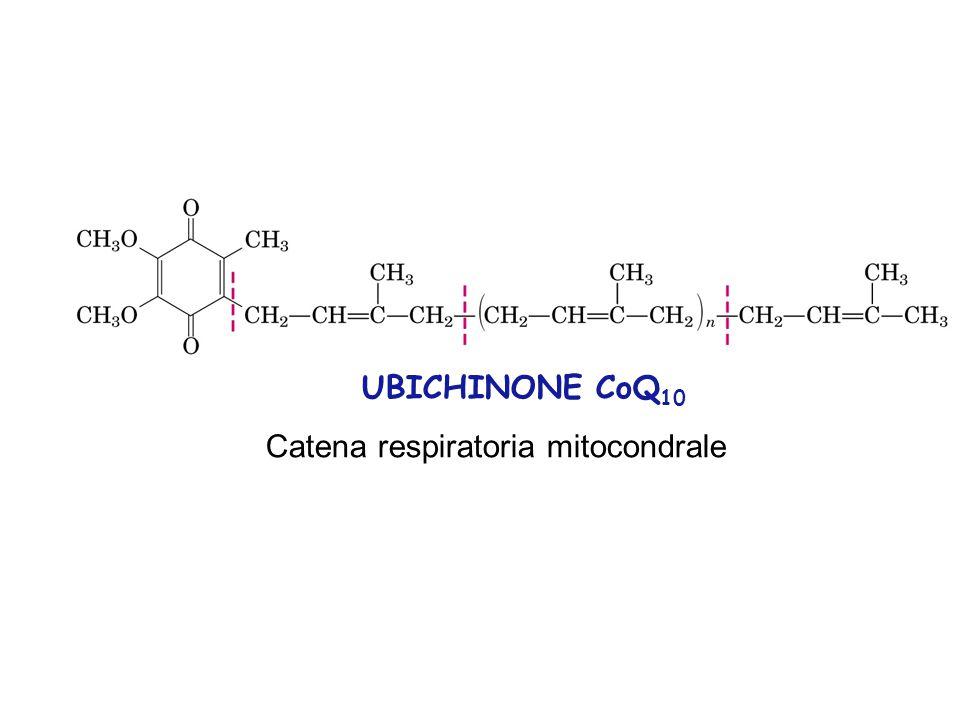 UBICHINONE CoQ10 Catena respiratoria mitocondrale