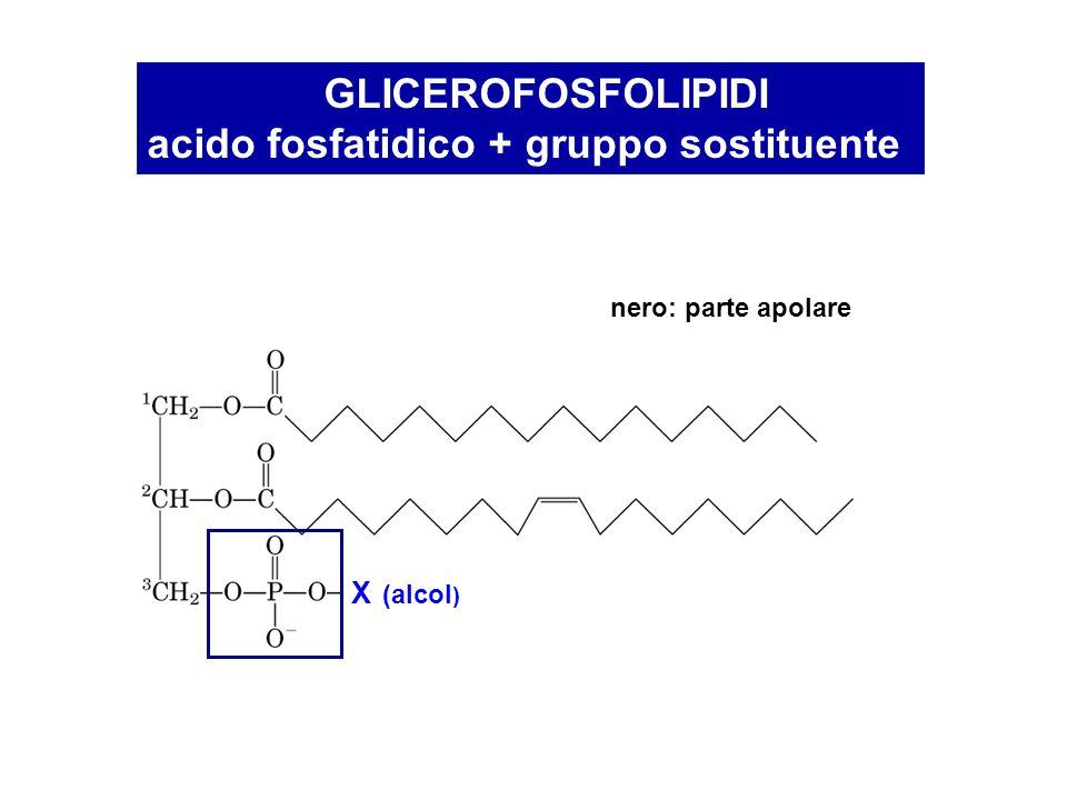 acido fosfatidico + gruppo sostituente