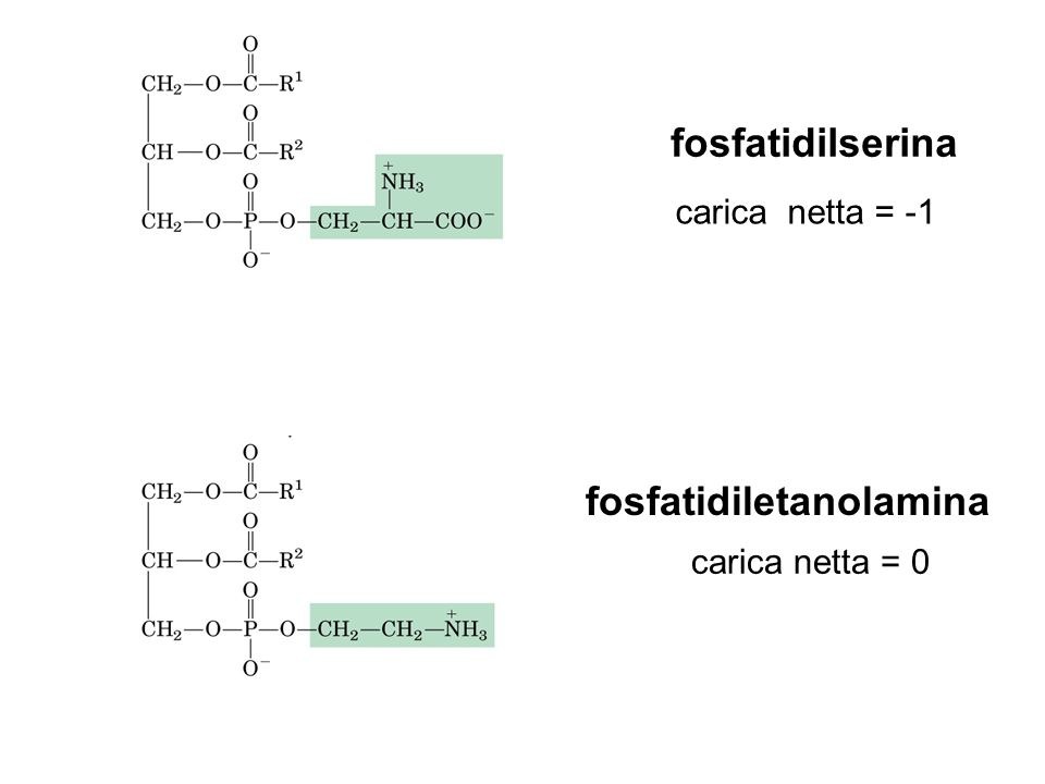 fosfatidiletanolamina