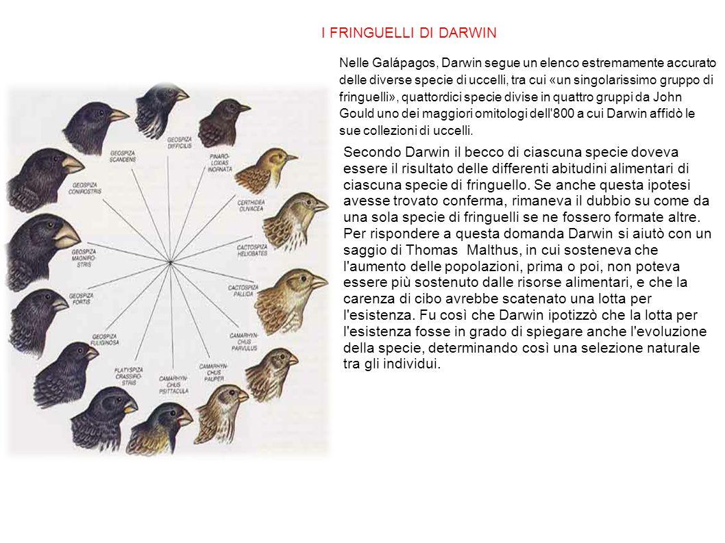 I FRINGUELLI DI DARWIN