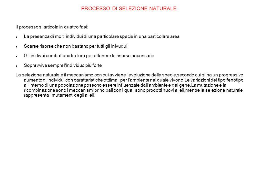PROCESSO DI SELEZIONE NATURALE