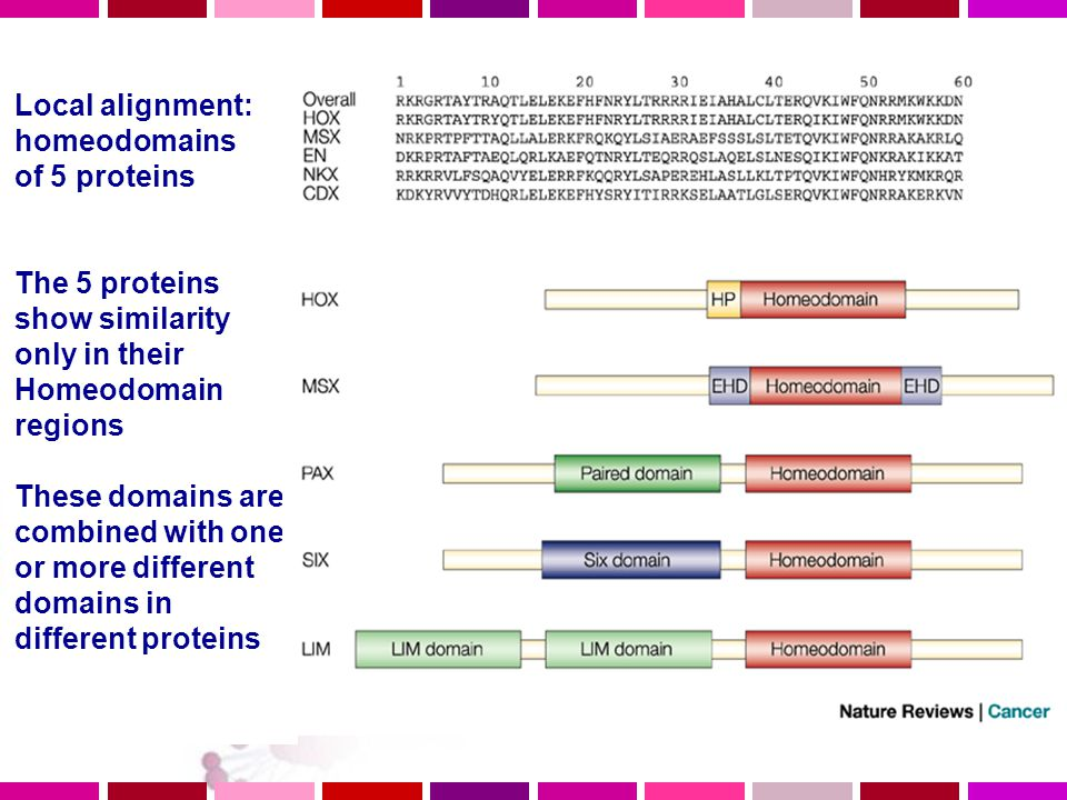 Local alignment: homeodomains of 5 proteins The 5 proteins show similarity only in their Homeodomain regions These domains are combined with one or more different domains in different proteins