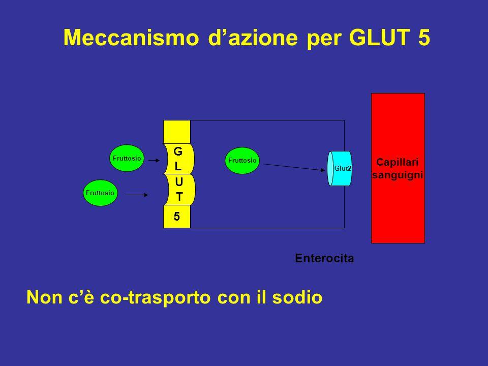 Meccanismo d'azione per GLUT 5