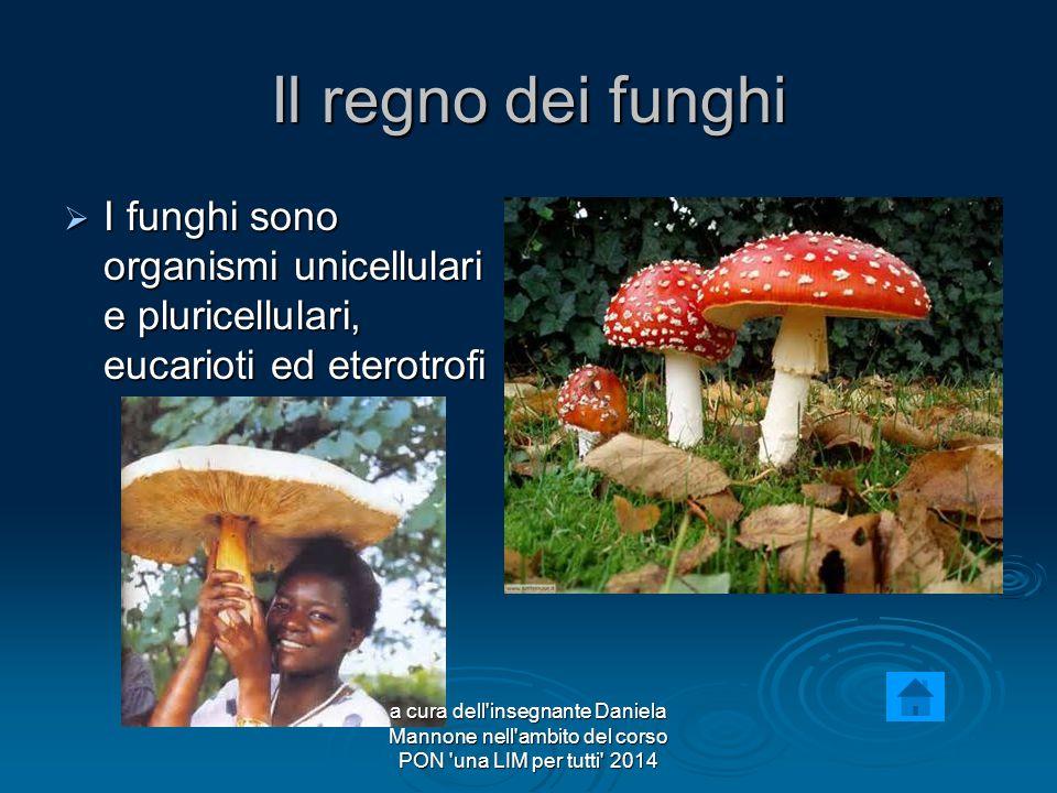 Il regno dei funghi I funghi sono organismi unicellulari e pluricellulari, eucarioti ed eterotrofi.