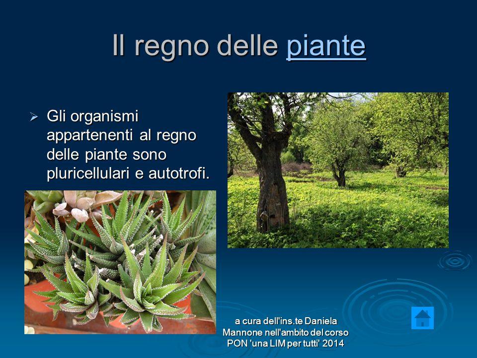 Il regno delle piante Gli organismi appartenenti al regno delle piante sono pluricellulari e autotrofi.