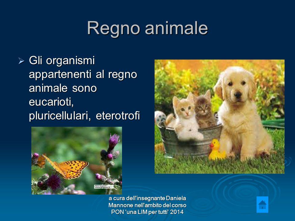 Regno animale Gli organismi appartenenti al regno animale sono eucarioti, pluricellulari, eterotrofi.