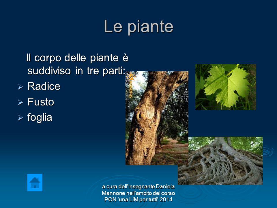Le piante Il corpo delle piante è suddiviso in tre parti: Radice Fusto