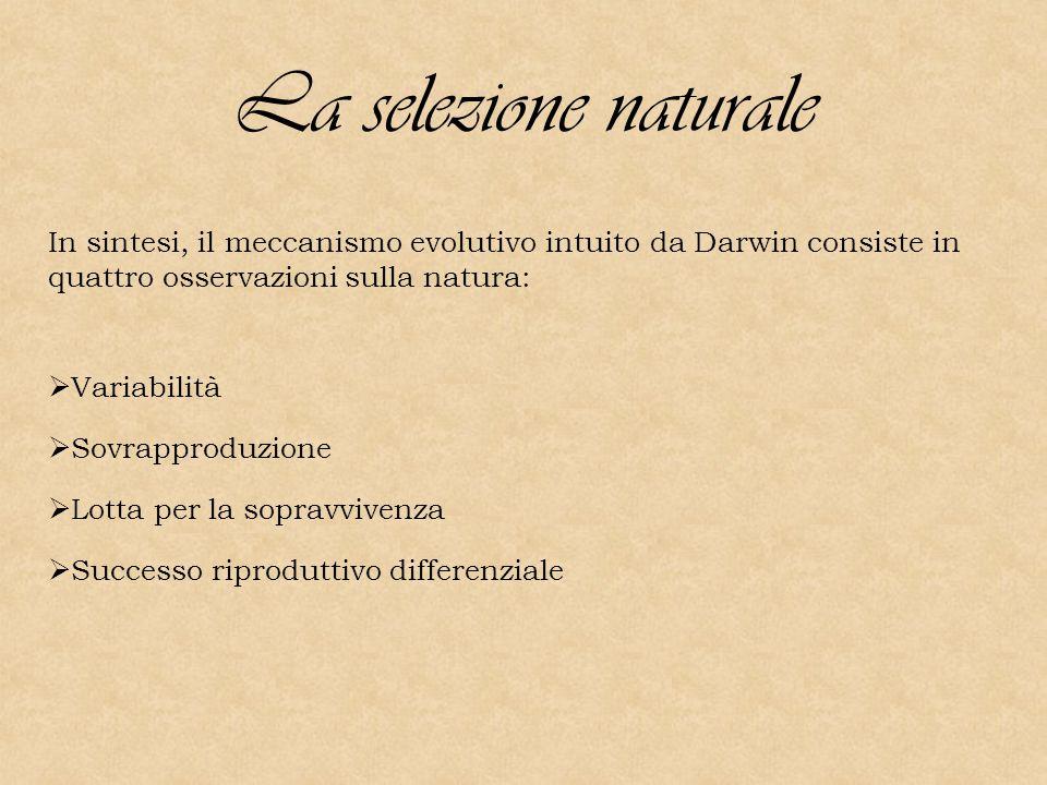 La selezione naturale In sintesi, il meccanismo evolutivo intuito da Darwin consiste in quattro osservazioni sulla natura: