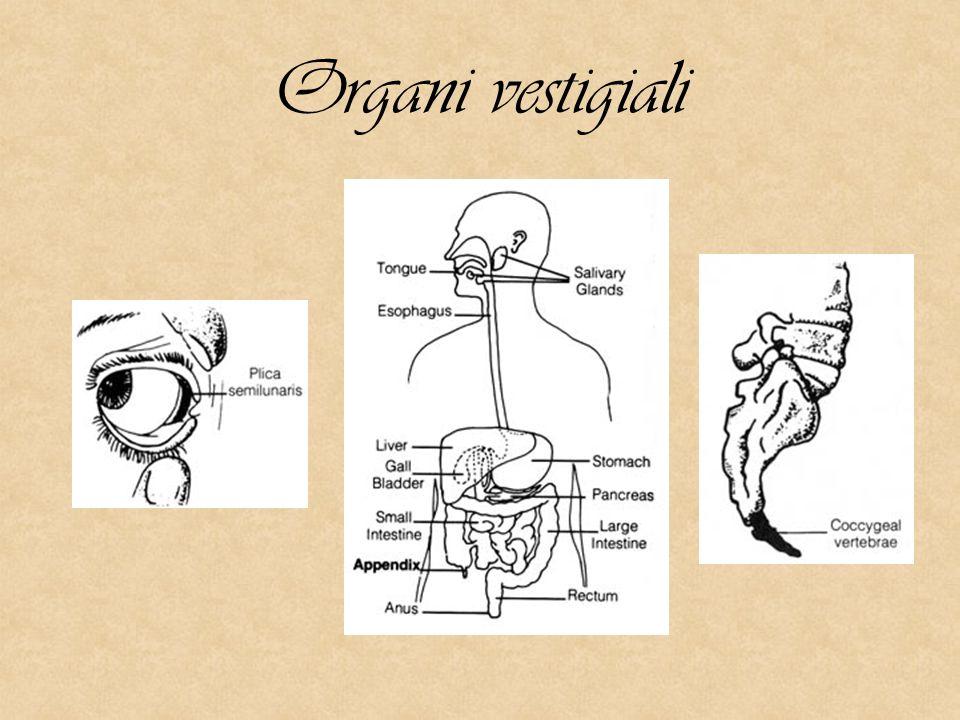 Organi vestigiali
