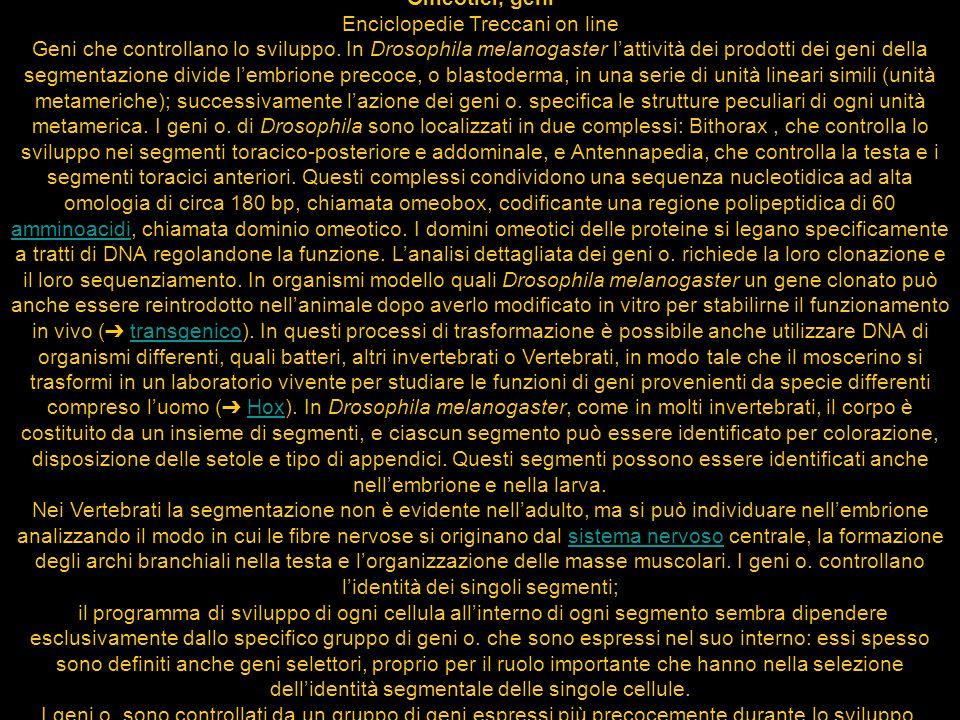 Enciclopedie Treccani on line