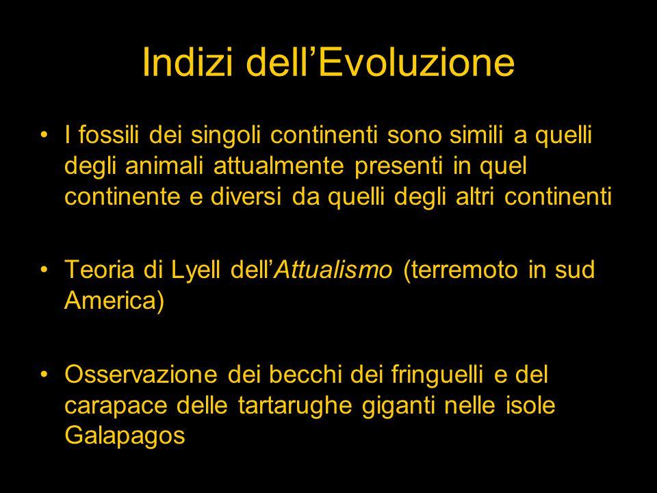 Indizi dell'Evoluzione